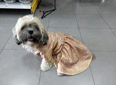 Dress's dog