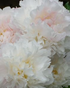 My Peonies, by Karl Seitinger 2014