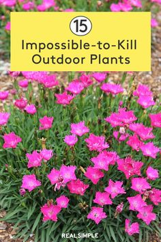 outdoor gardens 15 Impossible-to-Kill Outdoor Plants Outdoor Flowers, Outdoor Plants, Outdoor Gardens, Outdoor Spaces, Backyard Plants, Growing Flowers, Planting Flowers, Periannual Flowers, Pink Flowering Bushes