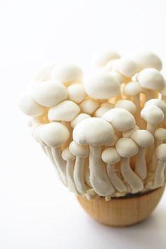 Japanese white beech mushroom