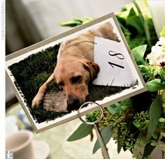 Adorable table numbers with your dog. You know how I love my pooch! [The Knot]