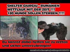 Wettlauf mit der Zeit - 180 Hunde sollen sterben!!