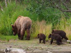 Katmai National Park, Alaska