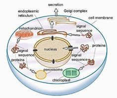 Biology is a subject of nature which is concerned with the study of all lives on earth. In case you have issues understanding a particular biology concept or need help complete your biology assignments, let Assignmentweb help to complete your tasks. http://www.assignmentsweb.com/biology-assignment-help/