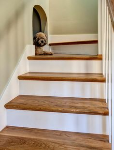 The 11 Best Dog Friendly Home Ideas   Page 3 of 3   The Eleven Best