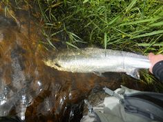 Dee & Don Salmon Fishing: Tulchan C - River Spey