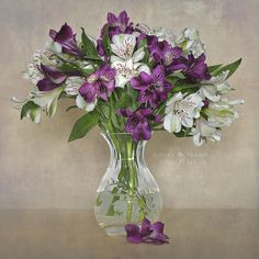 Peruvian Lilies by Jacky Parker Floral Art, via Flickr