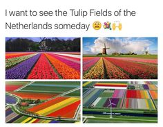 Tulip Fields in The Netherlands Beautiful Places To Travel, I Want To Travel, Oh The Places You'll Go, Cool Places To Visit, Vacation Places, Vacations, All Nature, To Infinity And Beyond, Future Travel