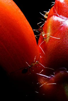 Awesome ant photo!  #ants