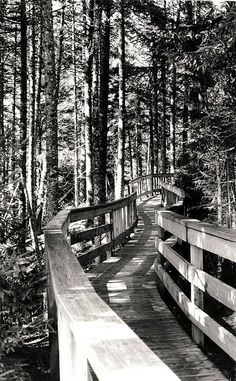 Magic Fundy Park by Art Changes Lives, via Flickr Fabric Art, Railroad Tracks, Watercolor, Explore, Black And White, Park, Awesome, Outdoor Decor, Photographs