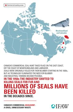 Add your voice to put an end to the seal hunt: http://g.ifaw.org/1S4oYsg