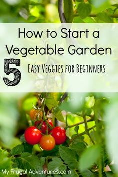 Tomato Gardening For Beginners How to Choose Plants for Your First Vegetable Garden - My Frugal Adventures. all from seeds: green beans, cucumbers, lettuce seed mix, and tomatos! - How to Choose the perfect plants for your first vegetable garden. Diy Garden, Edible Garden, Dream Garden, Lawn And Garden, Garden Ideas, Garden Plants, Garden Soil, Fruit Garden, Garden Bed
