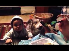 Amazing - Sibling Rivalry Family Dog Learns To Say Mama Before Baby VIDEO  #youtube #funny #video #clip s#dog #top #most #download #free #jokes #cats #baby #kids #watch #animals #home #mobile #cartoon #prank #comedy #football #all #world #humor #jokes #wonderfull #awesome #amazing