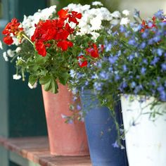 red, white and blue flowers for the 4th