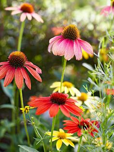 Perennials Designed to Survive Harsh Winters - I just thought this was pretty. Maybe for my prairie back garden. ;)