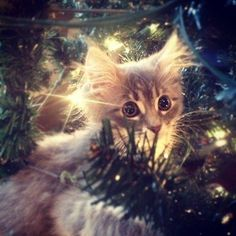 The 25 Days of Catmas: The Cat is Coming From *INSIDE* the Tree!!!!: