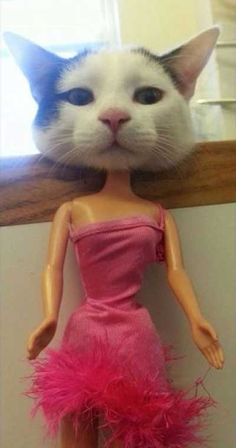 insolite barbie chat poupee