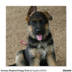 Wicked Training Your German Shepherd Dog Ideas. Mind Blowing Training Your German Shepherd Dog Ideas. German Shepherd Rescue, German Shepherds, Yorky, Schaefer, Dog Activities, Working Dogs, Beautiful Dogs, Amazing Dogs, Yorkshire Terrier