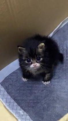 #cat #kitten #cutecat #cutekitten #cuteanimal #catvideo #kittenvideo #animalvideo Funny Cute Cats, Cute Baby Cats, Cute Cats And Kittens, Cute Little Animals, Cute Funny Animals, Kittens Cutest, Cute Animal Videos, Cute Animal Pictures, Cute Puppies