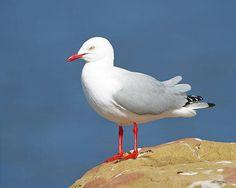 Como as aves marinhas eliminam o sal da água que ingerem?