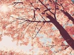Epitone Project - Spring Day, Cherry Blossoms & You (+playlist)