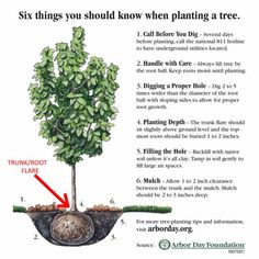 6 Things You Should Know When Planting A Tree - From the good folks at the Arbor Day Foundation Plants, Tree Care, Garden Trees, Landscape Trees, Trees And Shrubs, Arbor Day Foundation, Trees To Plant, Garden, Gardening Tips