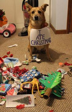 dog shaming, funny dogs - Dump A Day Dog Shaming Pictures, Funny Dog Pictures, Animal Pictures, Funny Photos, Funny Animals With Captions, Funny Captions, Christmas Animals, Christmas Dog, Christmas Trees