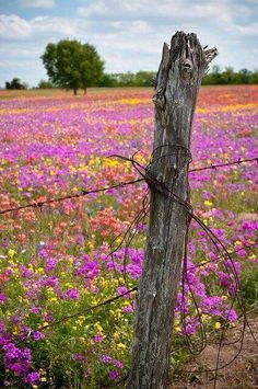 Texas countryside