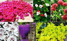 Eine fantastische Lösung für wunderschöne, flächige Gartengestaltung bieten die so genannten Bodende...