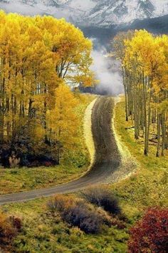 Aspen road in Boulder, Colorado.I do love Aspen Colorado! Places To Travel, Places To See, Beautiful World, Beautiful Places, Beautiful Scenery, Beautiful Roads, Beautiful Pictures, Amazing Photos, Amazing Places