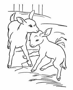 Baby Goat Coloring Pages - Among the farm animals, goats are crucial, because with their milk they produce cheeses that can be enjoyed and even yogurts. There are goat coloring . Camping Coloring Pages, Shape Coloring Pages, Farm Animal Coloring Pages, Easter Coloring Pages, Adult Coloring Pages, Coloring Pages For Kids, Coloring Books, Kids Coloring, Free Coloring