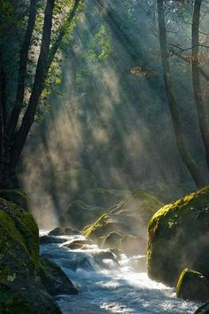 Beautiful sun shining through trees and river!