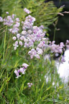9 plantes sauvages à cultiver au jardin
