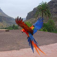 Show de aves exóticas de Palmitos Park.