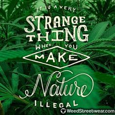 420 Weed Seeds Shop The best Cannabis Seeds For All needs : Feminized ,AutoFlowering and Regular Marijuana seeds.Grow your own weed out of seed Endocannabinoid System, Seeds For Sale, Medical Cannabis, Marijuana Art, Cannabis Oil, Smoking Weed, Ganja, Drugs, Herbalism