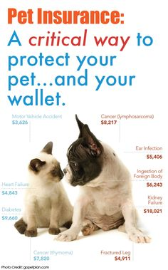 Pet insurance is very important when it comes to caring for your furry friend.