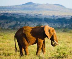 A Safari in Kenya #Finnmatkat