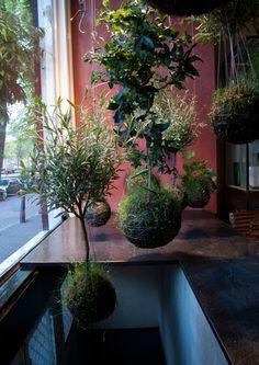 More String Garden Indoor Garden, Garden Plants, Indoor Plants, Moss Garden, Ficus Bonsai, String Garden, Dream Garden, Home And Garden, Vegetable Gardening