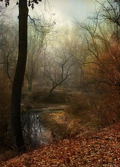 """""""Most consequential choices involve shades of gray, and some fog is often useful in getting things done. ~ Timothy Geithner  (photo by Veke47)"""
