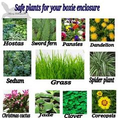 Safe plants for box turtles and tortoises