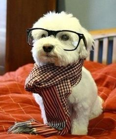""""""" i look so handsome,right? """" the puppy says."""