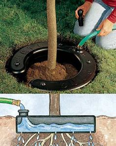 Water Ring. The 5-gallon reservoir prevents the dry-out that stunts growth,  you can add fertilizer a little at a time to promote strong root development.