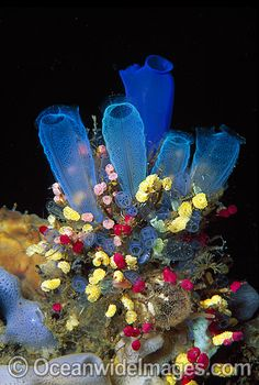 Tunicates- this looks like a beautiful bouquet