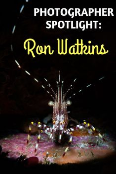 In this series of articles, we'll shine a spotlight on some of the world's best underwater photographers. Today we highlight Ron Watkins. Underwater Photographer, Underwater Photos, Underwater World, Amazing Photography, Photography Tips, Nautical Drawing, Get Excited, Scuba Diving, Cool Pictures