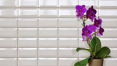 Seinälaatta Primus 10 x 20 cm valkoinen. Walltile Primus 10 x 20 cm white.k-rauta. Decor, Modern Bathroom, Sweet Home, Flooring, Interior, Blinds, Modern, Home Decor, Floor Wallpaper