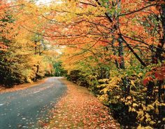 Top 10 routes for viewing Maine fall foliage. A native Mainer shares the best routes to drive to enjoy Maine fall foliage views.