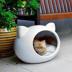 Animais De Estimao On Pinterest Gatos Amigos And Pets