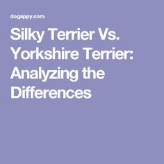 Silky Terrier Vs. Yorkshire Terrier: Analyzing the Differences