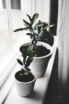Just another lemon tree {ohsosimple.se}