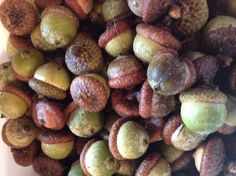 how to dry decroate acorns fall decor, halloween decorations, how to, seasonal holiday decor